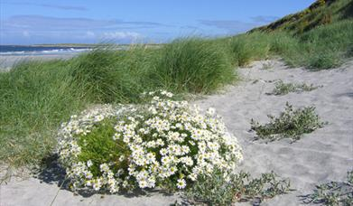 Milton Beach and Machair