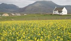 Machair Flowers-Howmore
