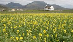 Howmore Beach and Machair