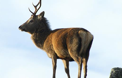 Red Deer-Garynahine